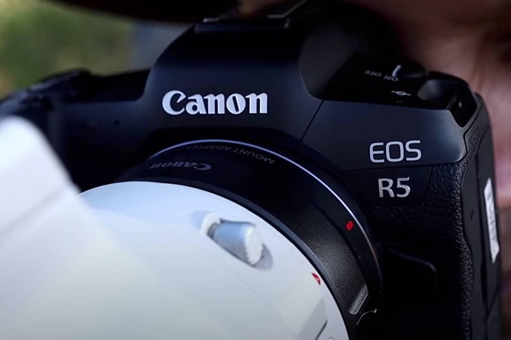 Canon EOS R5 Animal Eye Autofocus | First Impressions. Andrew beck