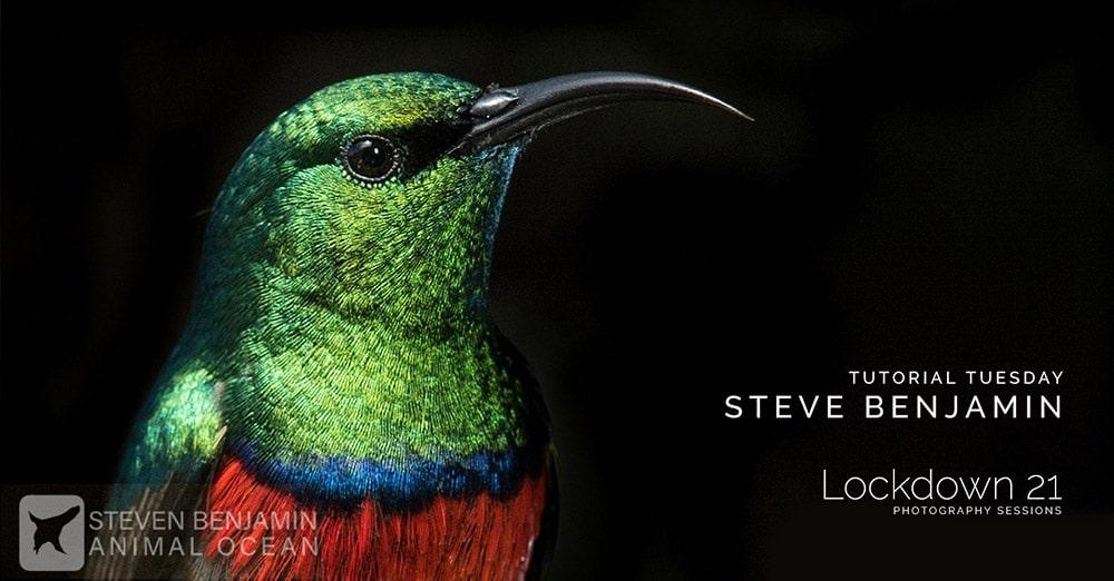Hunters of light tutorials | Steve Benjamin