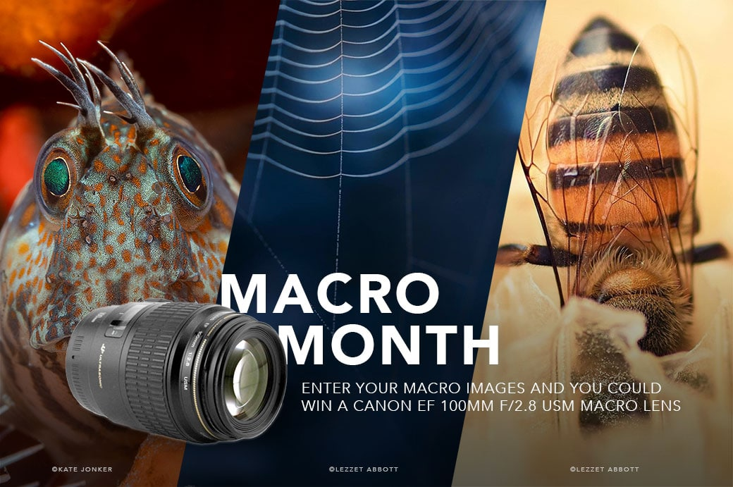 Macro month on the Hunters of Light