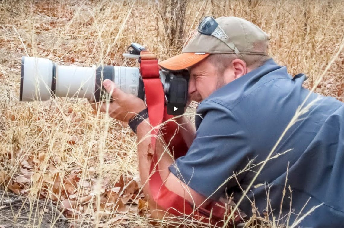 Canon R5 & Canon RF 100-500mm F4.5-7.1L IS USM for Wildlife